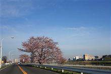 日曜日の朝は...桜ドライブ と ☆乃モーニング