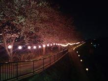 さくら✩サクラ✩桜✩Sakura