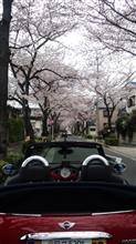 桜×オープンカー