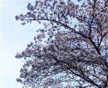 花見して 桜もち食べて ウマかった