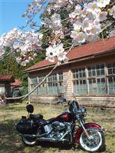 桜・・・まだ早かった。