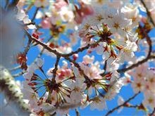 ようこそ桜前線