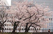 東京にSAKURAを見に・・・
