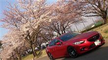 ☆桜の開花と共に☆