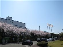 満開です、オーテックの桜!