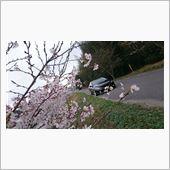 桜コラボ‼