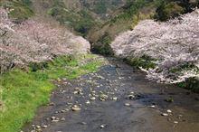 伊豆桜ドライブPART2