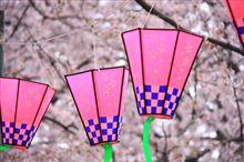 引地川~千本桜2015