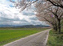 桜巡り 御車返しー城跡の巨大桜へ