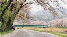 桜を背景にクルマを撮影 リトライ