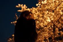 仕事終わりで突然夜桜。