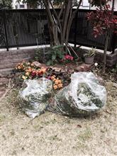 夏を迎えるにあたって植木を切りましたー。