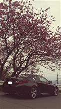 生駒山のお寺帰りに牡丹桜とRC