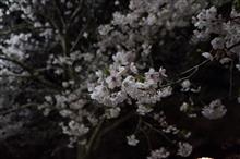 会社帰りに夜桜見物