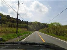 サファリの車窓から! 桜