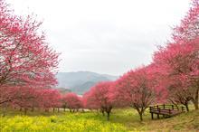 今年最初の春。in 冨士山(とみすやま)