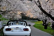 桜がはじまり?