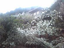 御岳山⑰:第4回HOと行くHT案内ツアー