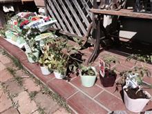 家庭菜園の季節となりました!
