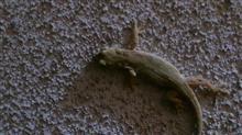 闇に蠢く爬虫類