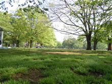 新緑の公園…