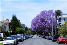 今年の紫雲木も終わり