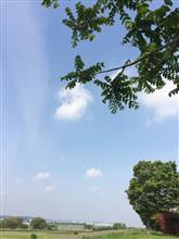 【川崎】多摩川散策(o^^o)