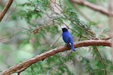 今日も青い鳥