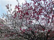 昼神温泉花桃の里by花づくし編