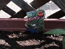 天気が良いのは今日だけみたいですが。。。インゲン植えました♪