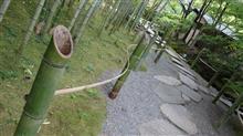 竹と垣根の見本市か(笑