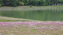 本栖湖へ芝桜を見に行ってきた.