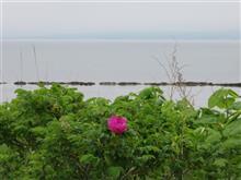 北海道3(函館から松前経由江差まで)