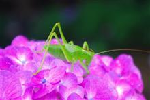 昆虫採集(^_^)