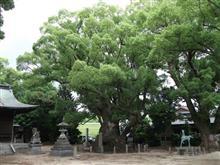 巨樹。訪問。。。八柱神社の樟。。。豊田市畝部東町。。。
