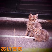 中々現れない子猫達。。。(^◇^;)