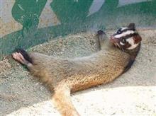 今度は動物の死体が・・・・