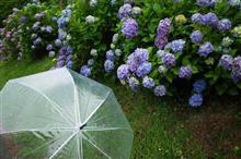 雨露に濡れて。