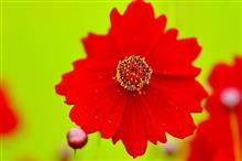 6月の花色