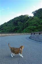 蛤岳横断線の見所w