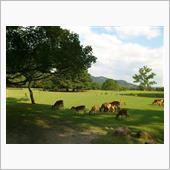 久し振りに奈良公園通過