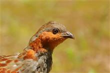 7月12日の鳥撮り散歩
