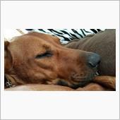 うちの愛犬の寝顔って。。。