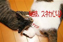 ラーメンオフin長岡市と猫とWin10のお話し