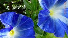 台風の朝の花たちと身の周りの事件