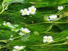 水中花、美しさは倍かも。