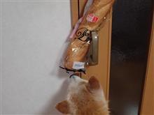 リビングのドアハンドル ワンコ簡単に開けることでません