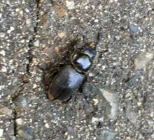山小屋の昆虫達