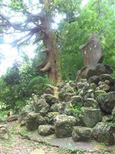 世にも不思議な木