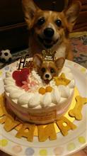 ななちん10歳のお誕生日!!